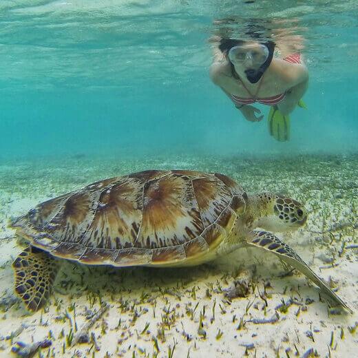 Eine wunderschöne Meeresschildkröte im Hausriff, der ich beim Schnorcheln begegnet bin.