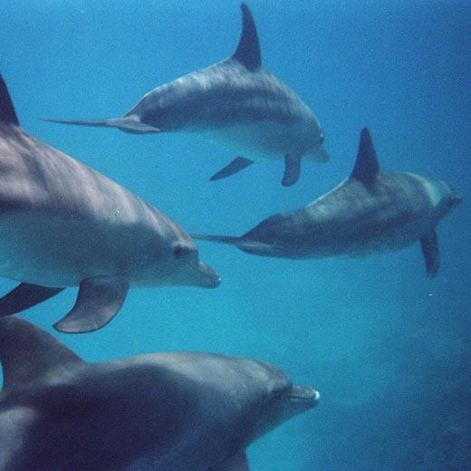 Point fort de notre journée: nager avec les dauphins