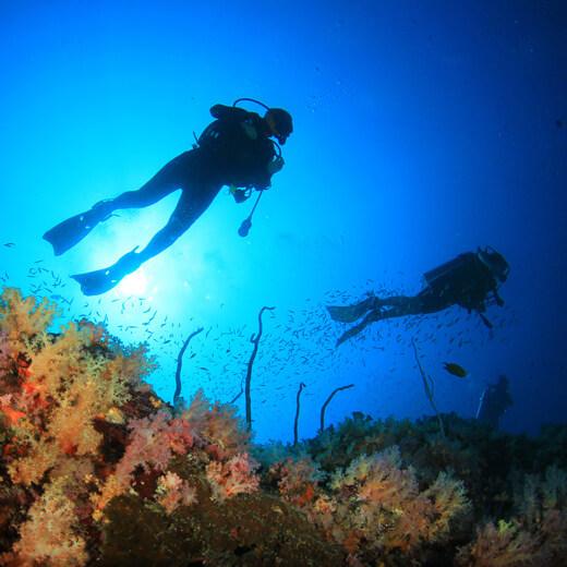 Entdeckt die wundervolle Unterwasserwelt