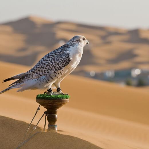 Trotz Lärm immer ein beliebtes Ausflugsziel: die Wüste um Dubai