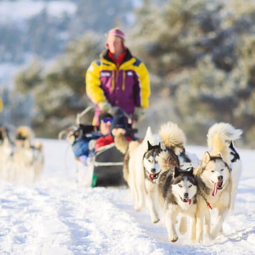 Warum nicht mal von Huskies durch den Schnee gezogen werden?