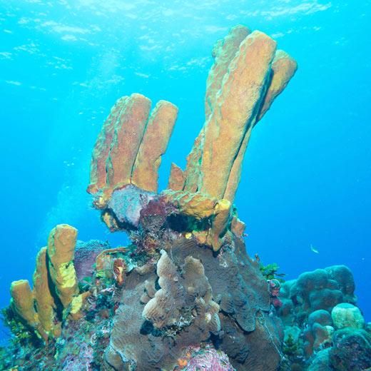 Faszinierende Unterwasserwelt im Garrafón Natural Reef Park