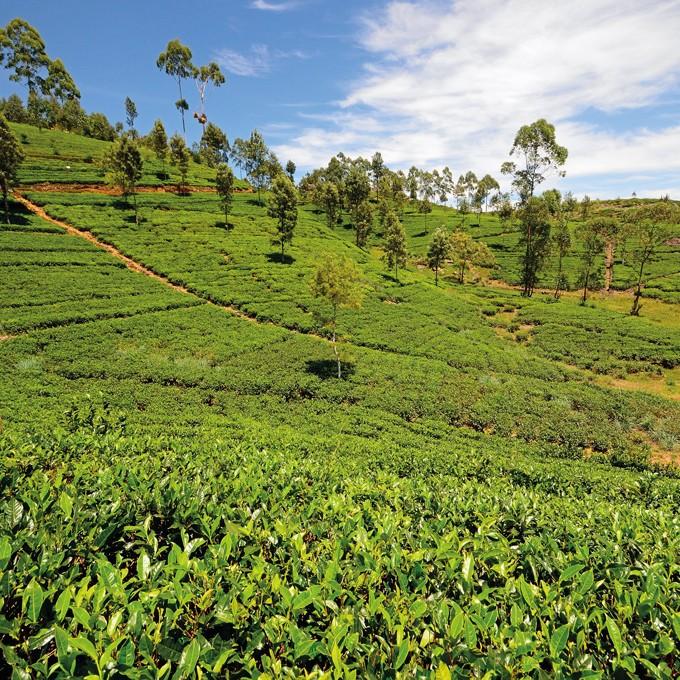 SriLanka_header_CL1