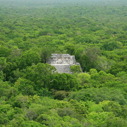 Calakmul, eine Maya-Stätte im tiefsten Dschungel
