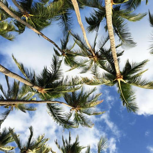 Geniesst die Aussicht auf die hawaiischen Palmen