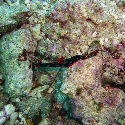 Entdecke die wunderbare Unterwasserwelt