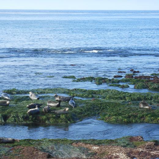 Unbedingt einen Halt einlegen beim Seal Rock, La Jolla
