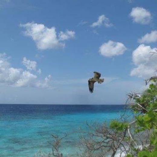 Une baie à Curaçao