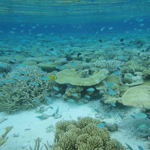 Découvrez les merveilleux fonds sous-marins!