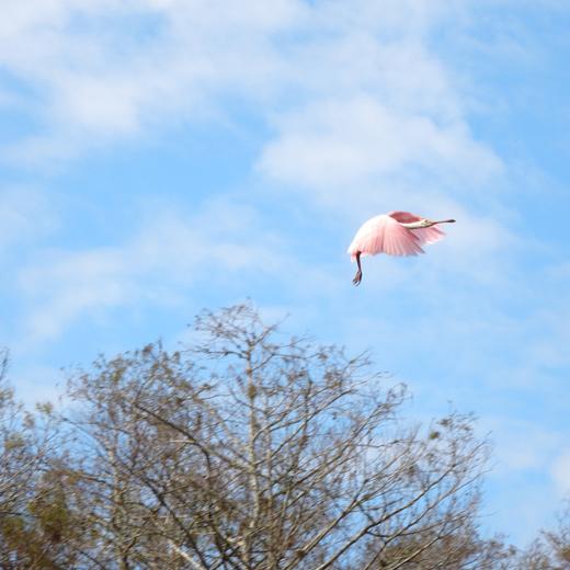 Auch Flamingos trifft man in Park