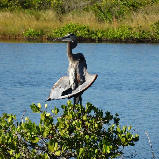 Entdecke die verschiedenen Vogelarten im Merritt Island National Wildlife Refuge