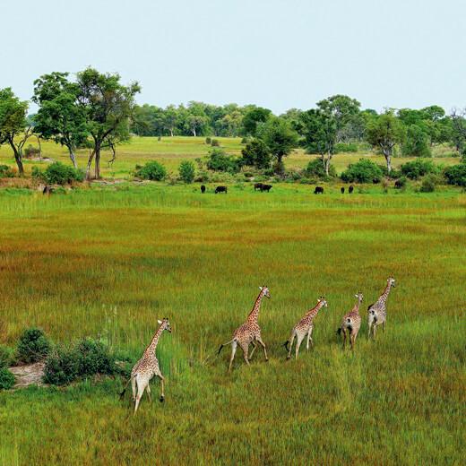 Ausblick über Botswana