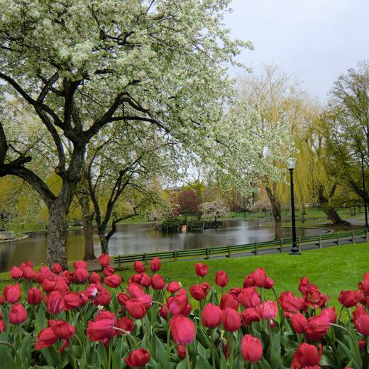 Boston Public Garden mit seinen bunten Blüten