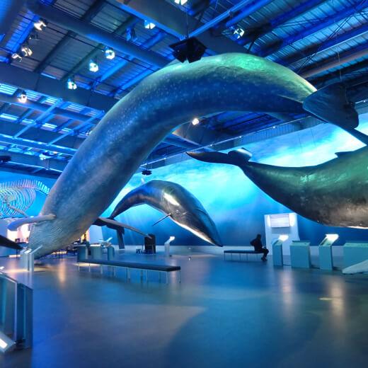 Walmuseumin Reykjavik