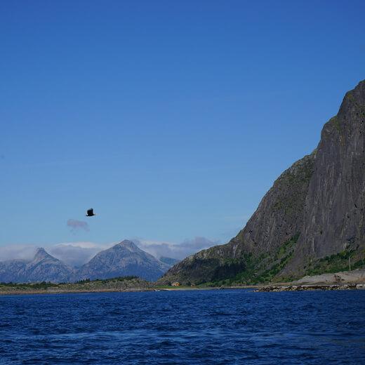 Ein Adler beim Rib Boat Ausflug