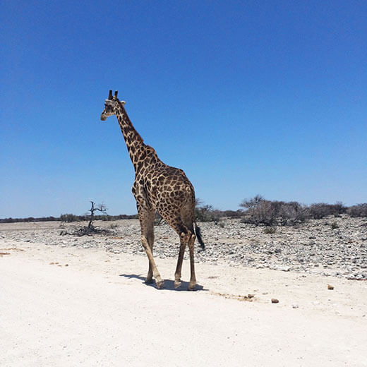 Tierbeobachtung im Nationalpark