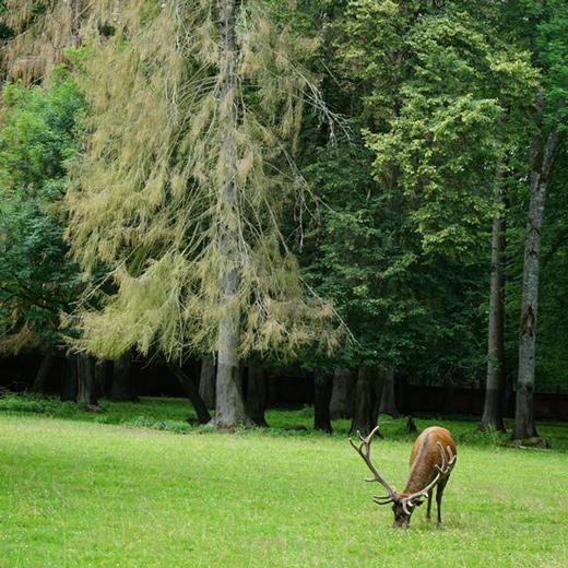 Das Naturreservat Bialowieza