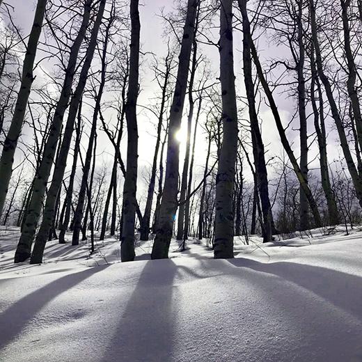 Fahrten durch die Birkenwälder von Beaver Creek haben einen besonderen Reiz.