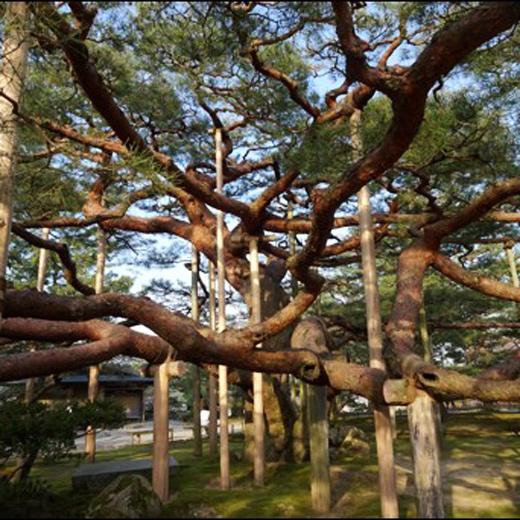 Le jardin Kenrokuen