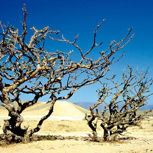 Karge Landschaft im Oman