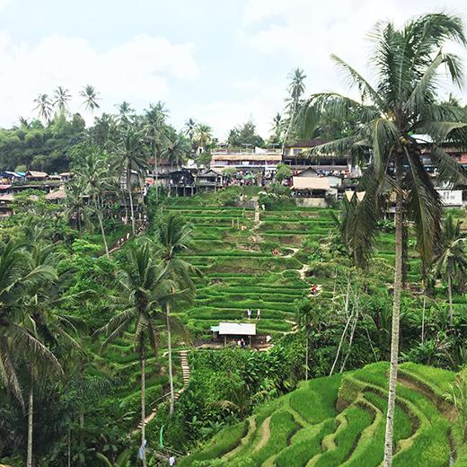 Aussicht auf die Reisterrassen