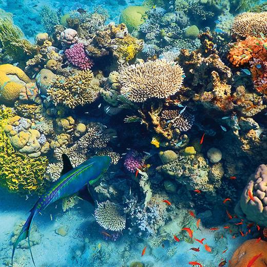 Eilat, paradis de plongée