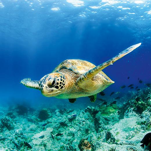 Explorez le monde sous-marin de la mer Rouge