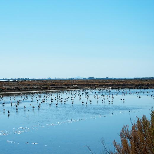 Le parc national de Doñana
